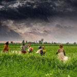 Ways In Which Artificial Intelligence Is Transforming The Agricultural Sector Of India